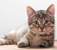 sestra Veľká mačička teenagerov mačička videá